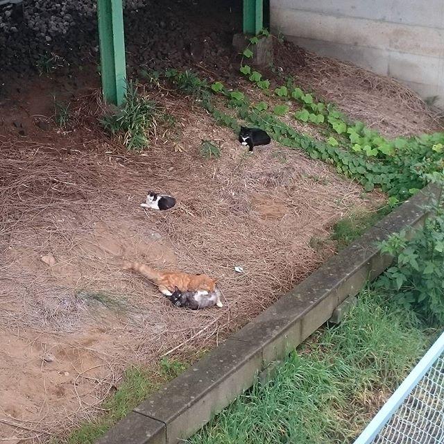 猫の雨宿り!台風に気を付けて!#猫