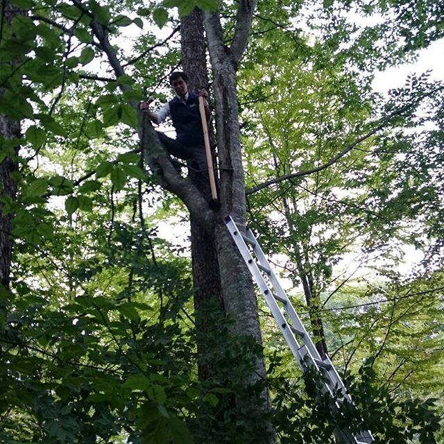 枝払い。小学生以来の木登りです!怖い!#木登り#山